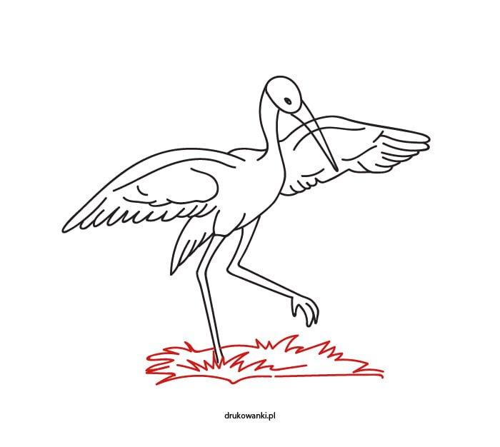 ćwiczenia rysunku bocian