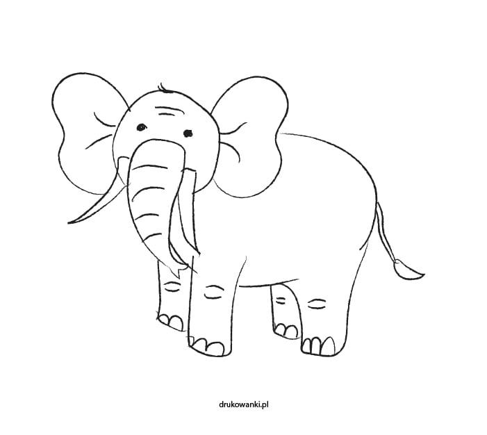 słoń kolorowanka dla dzieci