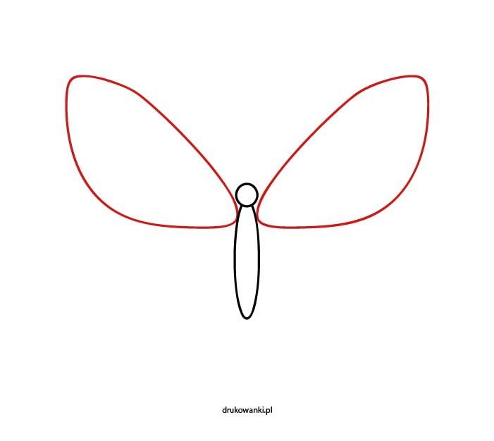 jak narysować motyla instrukcja