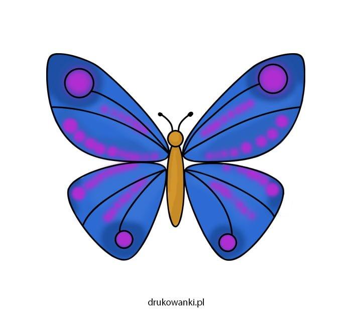 kolorowy motyl rysunek
