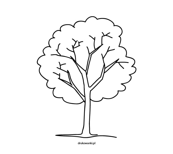 drzewo kolorowanka