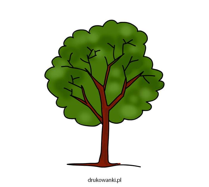 rysunek kolorowe drzewo