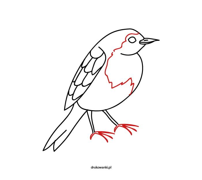 rysunek ptak