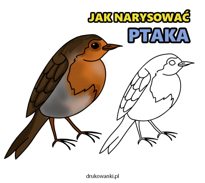 jak narysować ptaka
