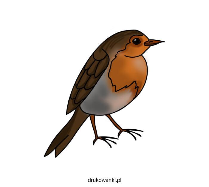 kolorowanka ptak