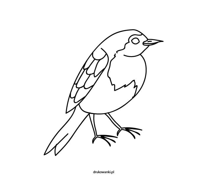 ptak kolorowanka dla dzieci