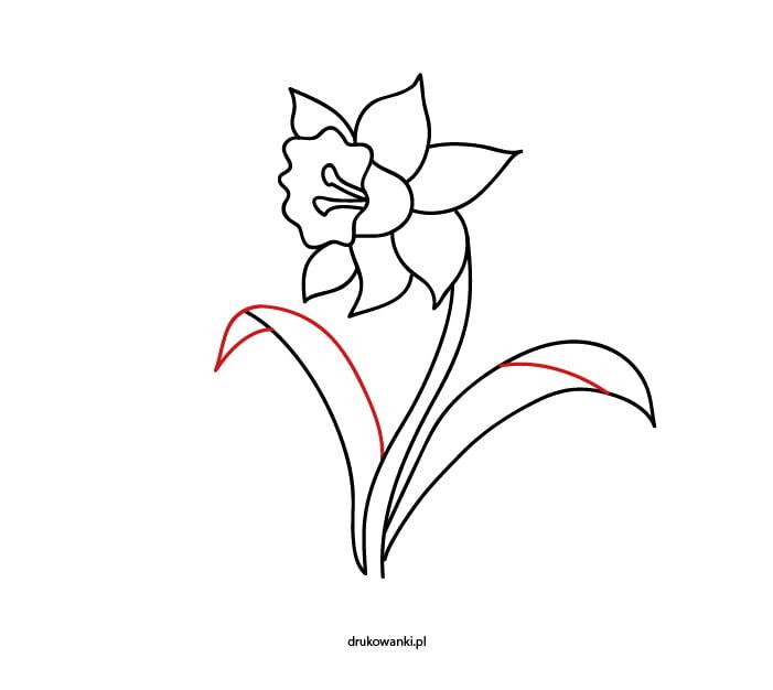 kwiat wiosenny żonkil rysunek