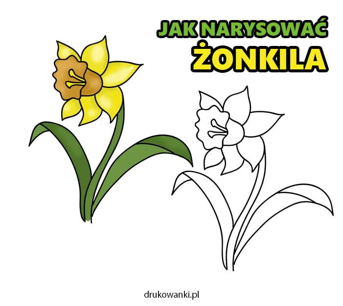 jak narysować kwiata żonkila