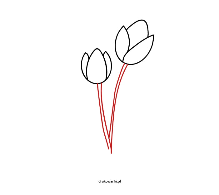 jak namalować tulipany