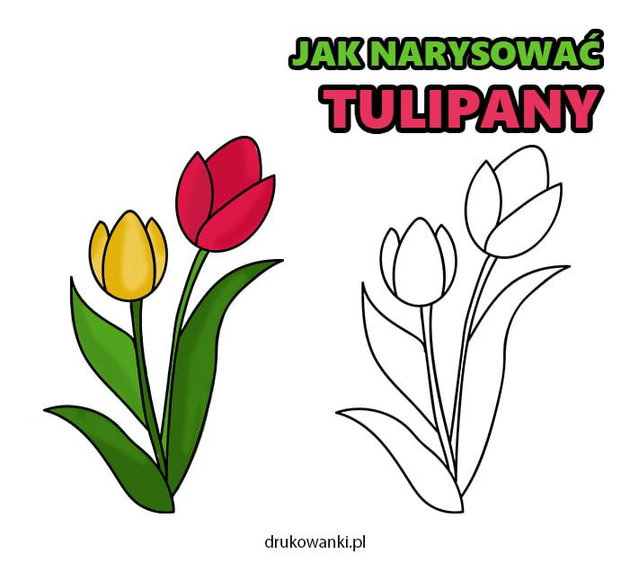 jak narysować tulipany