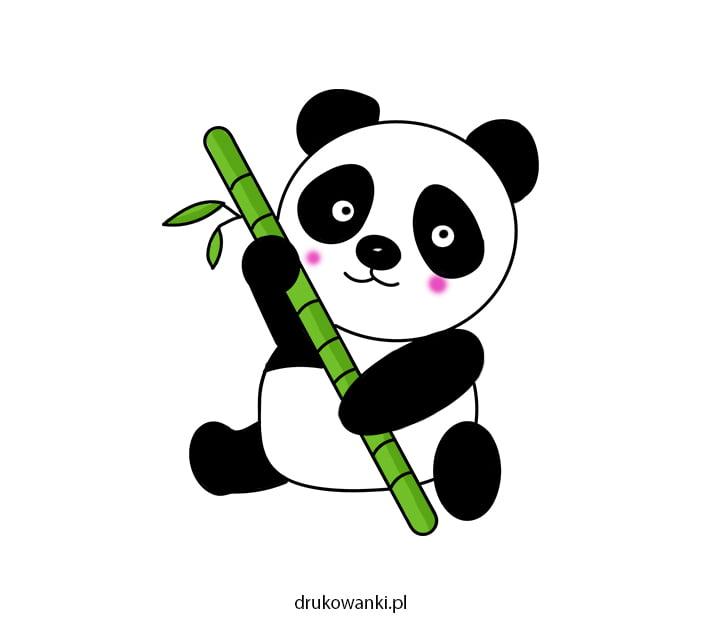 kolorowy rysunek pandy