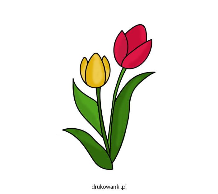 kolorowy rysunek tulipanów