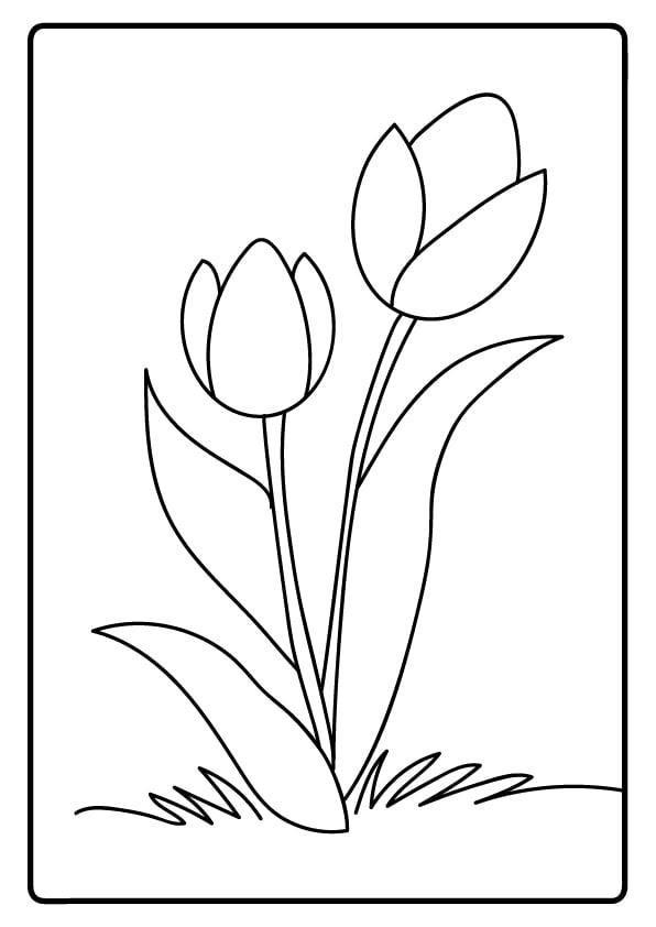 kolorowanki kwiatów tulipany