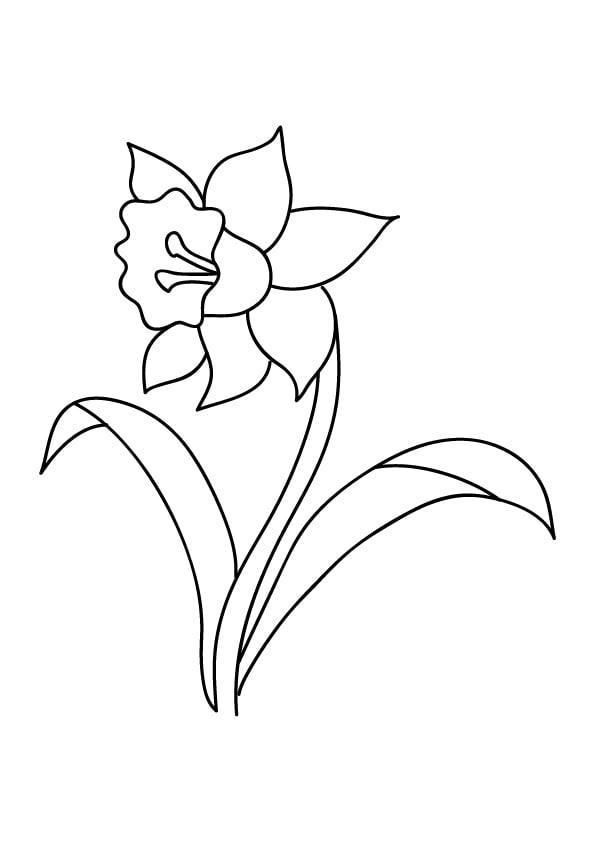 kolorowanka na wiosnę kwiat