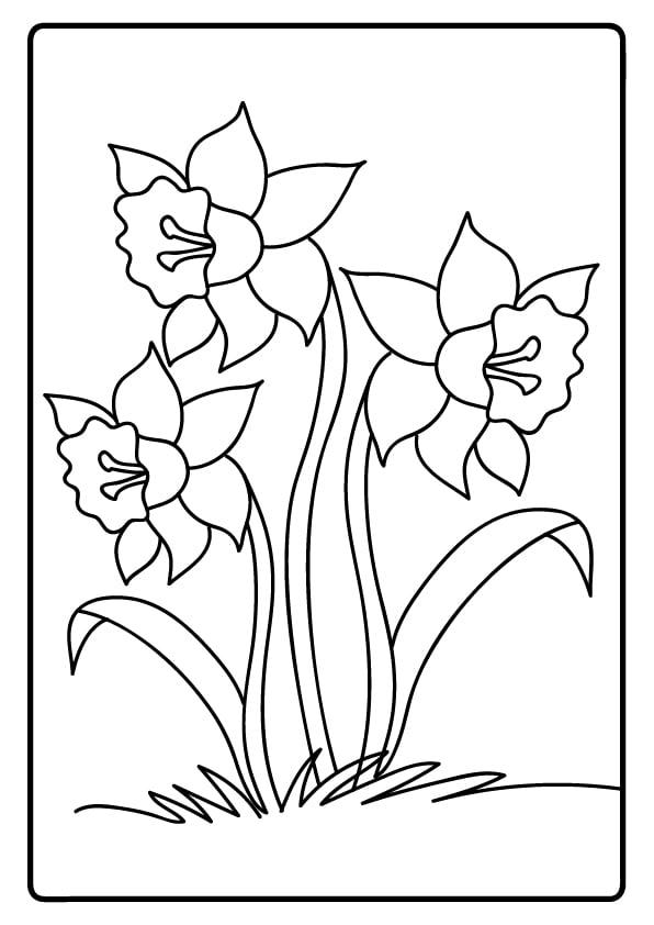kolorowanki kwiatów żonkile
