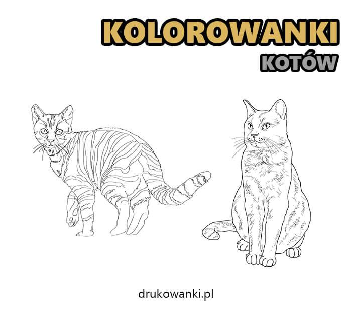 kolorowanki kotów do druku