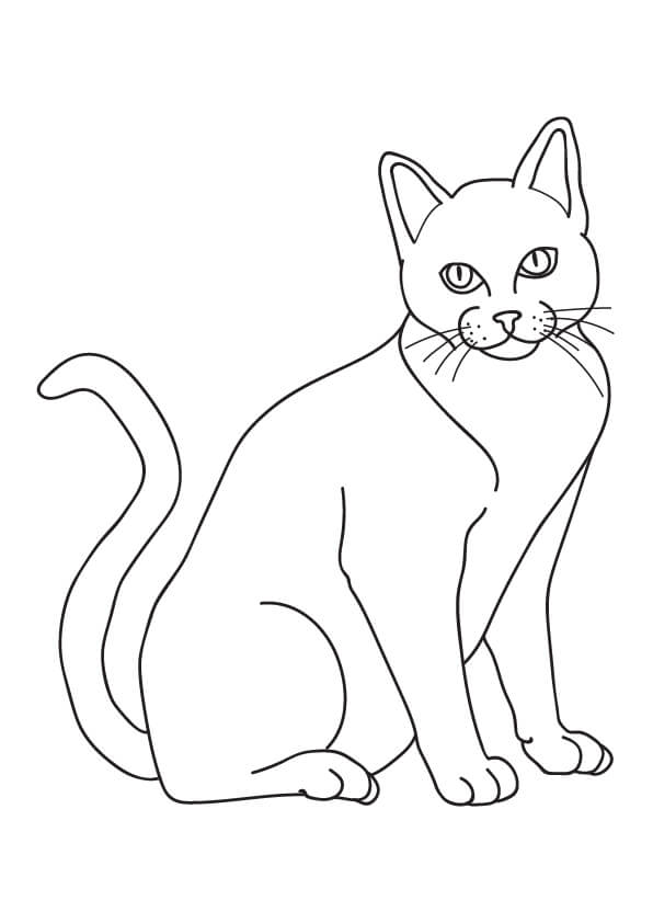 kot rysunek kota