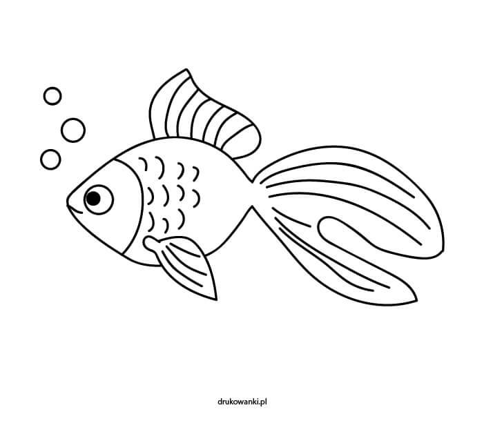 ryba kolorowanka