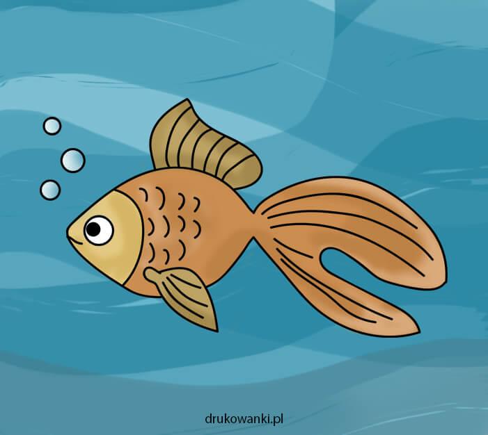 złota rybka rysunek