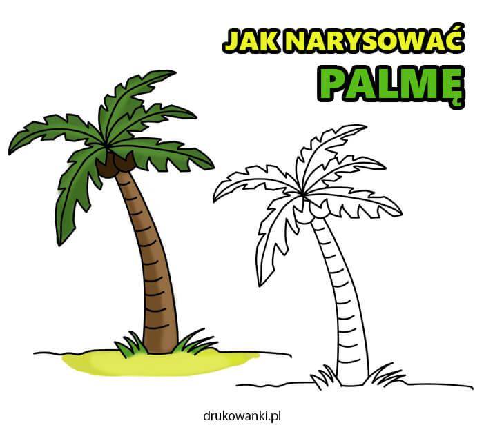 jak narysować palmę instrukcja w obrazkach krok po kroku