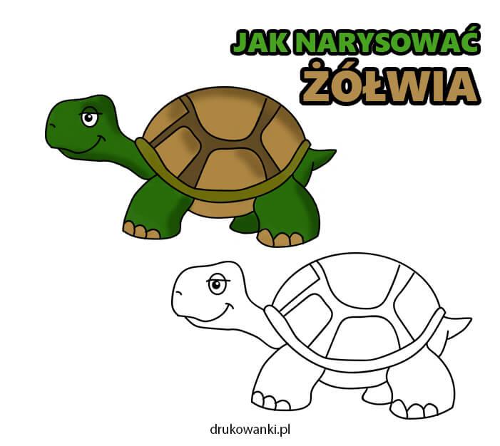 jak narysować żółwia instrukcja