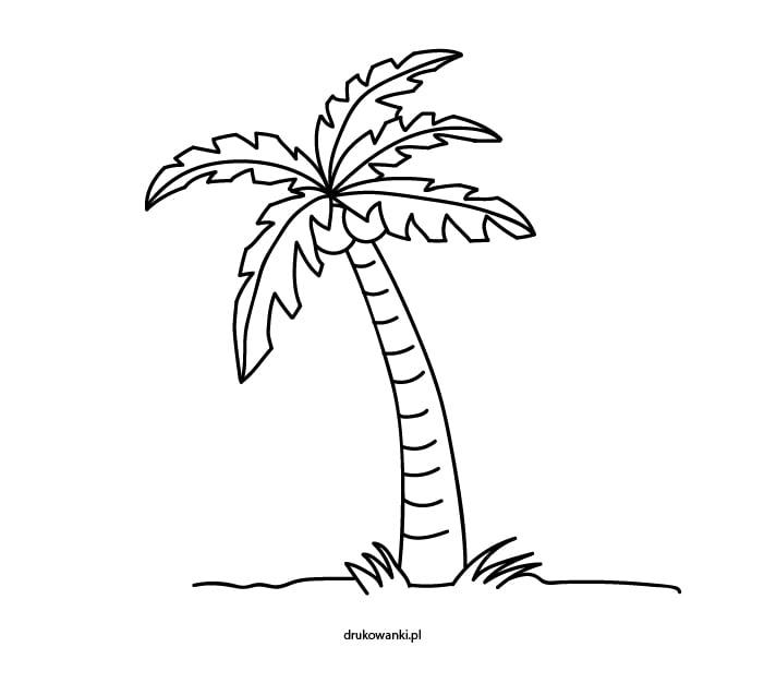 palma kolorowanka dla dzieci