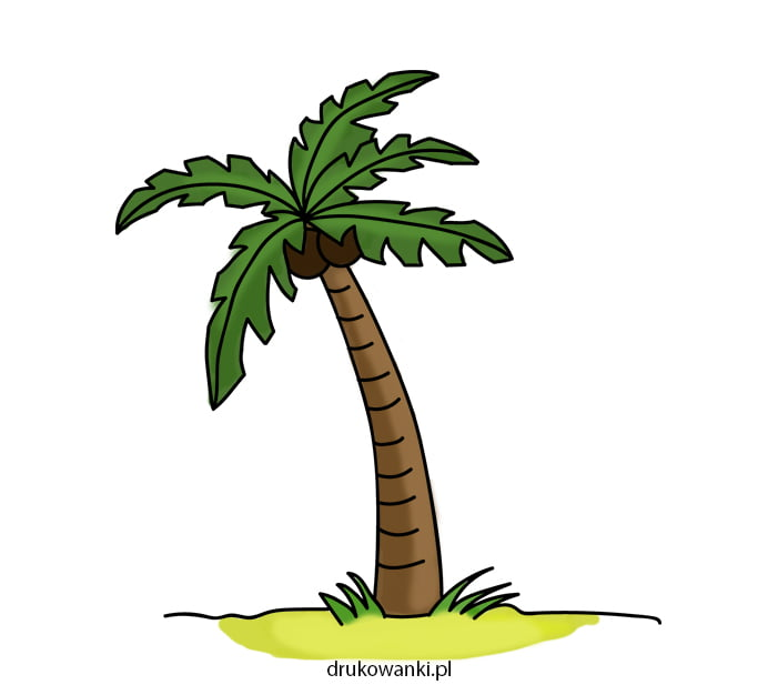 kolorowy rysunek palmy