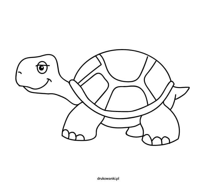 kolorowanka z żółwiem
