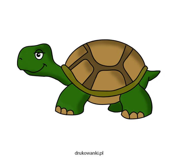 kolorowy rysunek żółwia