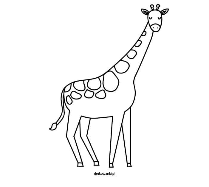 kolorowanka żyrafa
