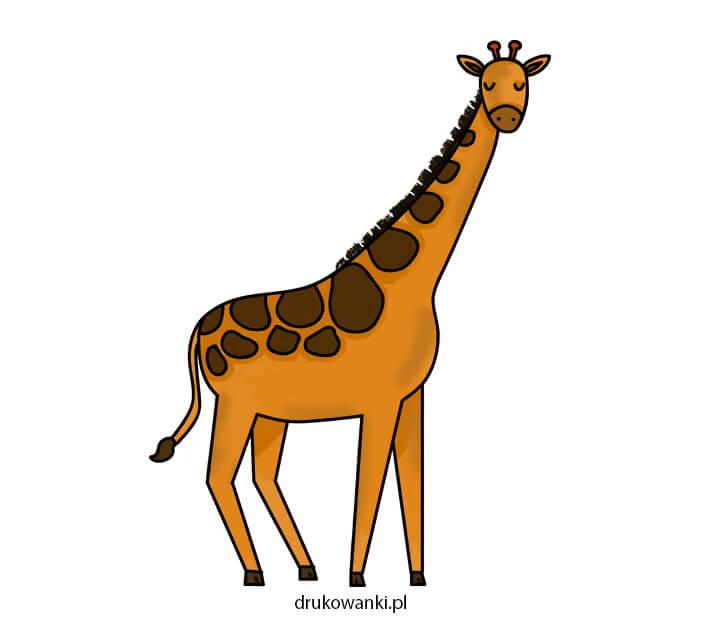 kolorowy rysunek żyrafy
