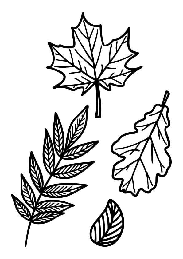 kolorowanki jesienne liście