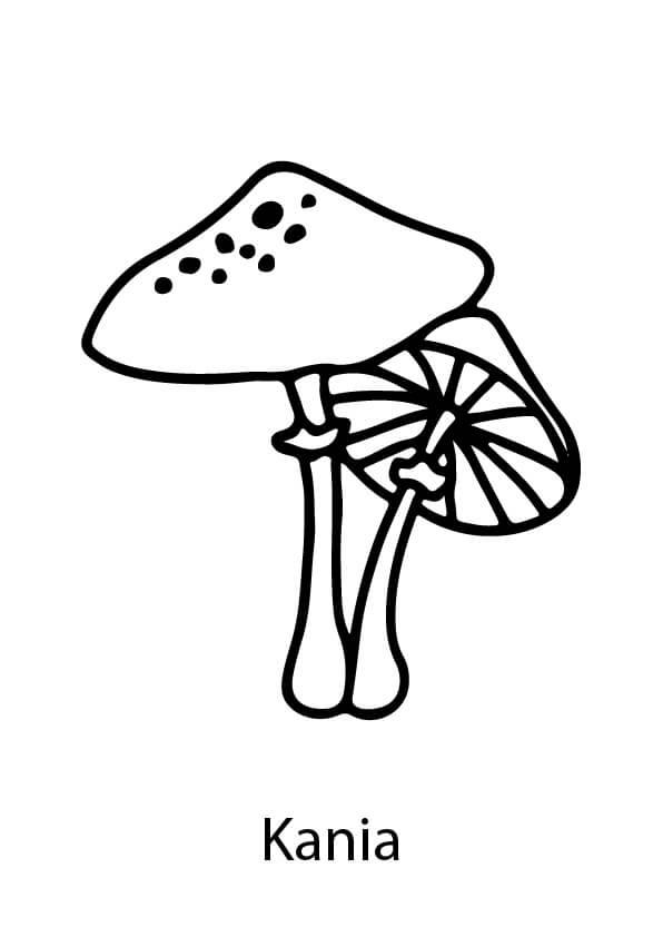 jesienne kolorowanki grzyby jadalne