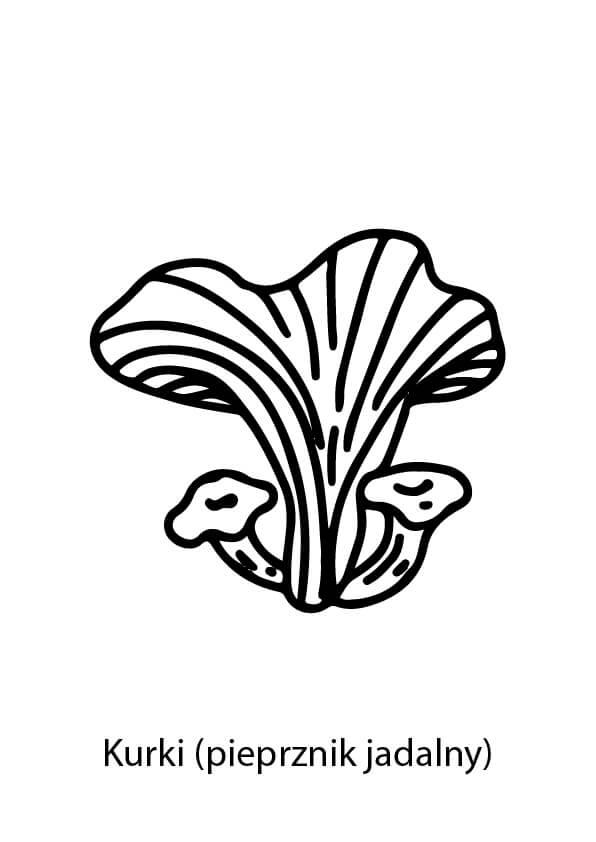 kurki grzyby kolorowanka