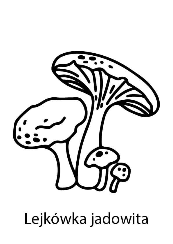 grzyby trujące rysunki