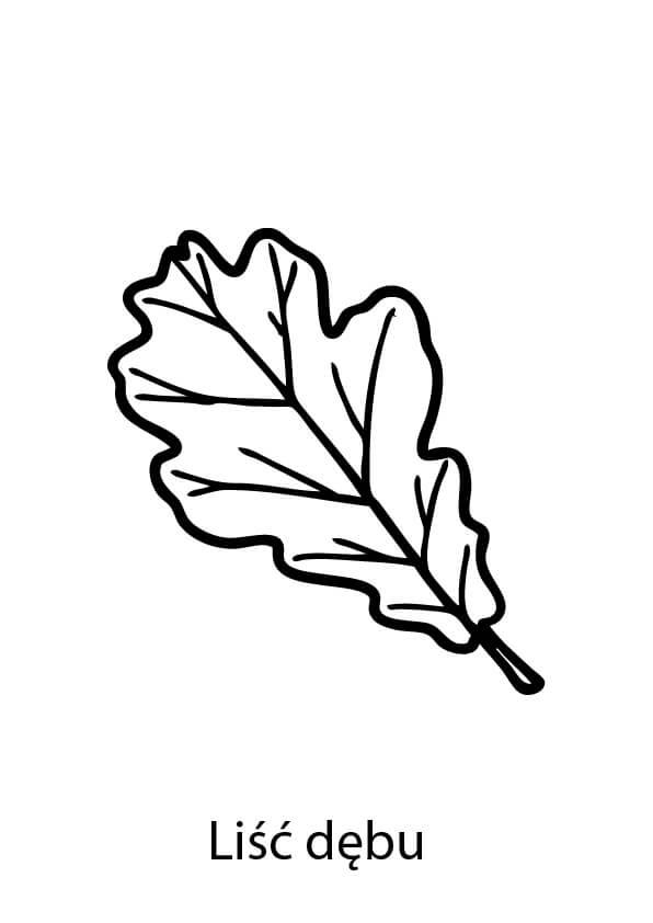 liść dębu kolorowanka