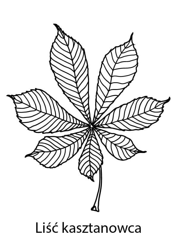 kolorowanki jesienne liście szablony