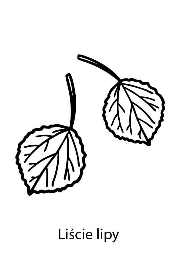 lipa liść szablon