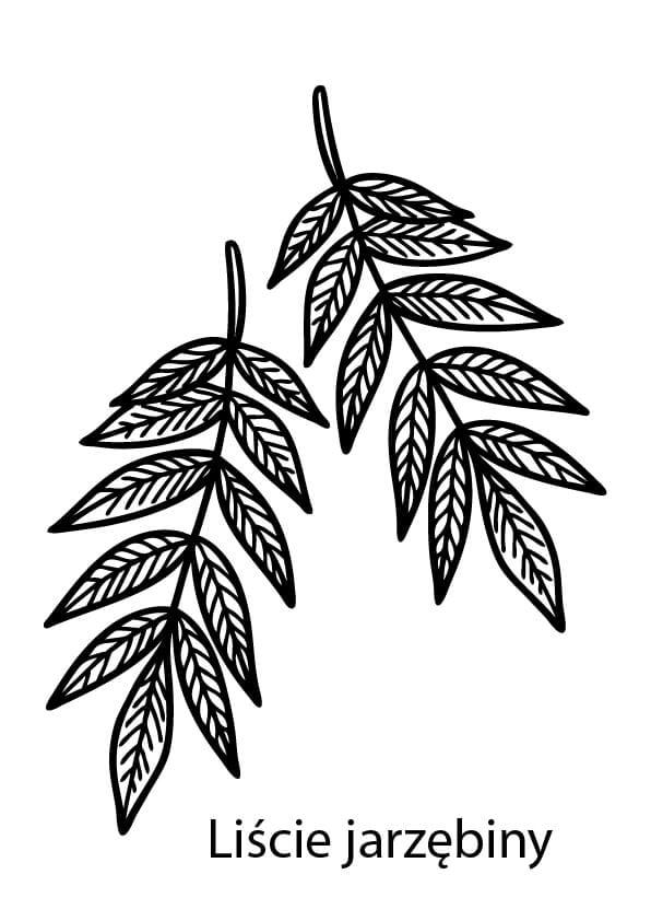 liście jarzębiny do druku