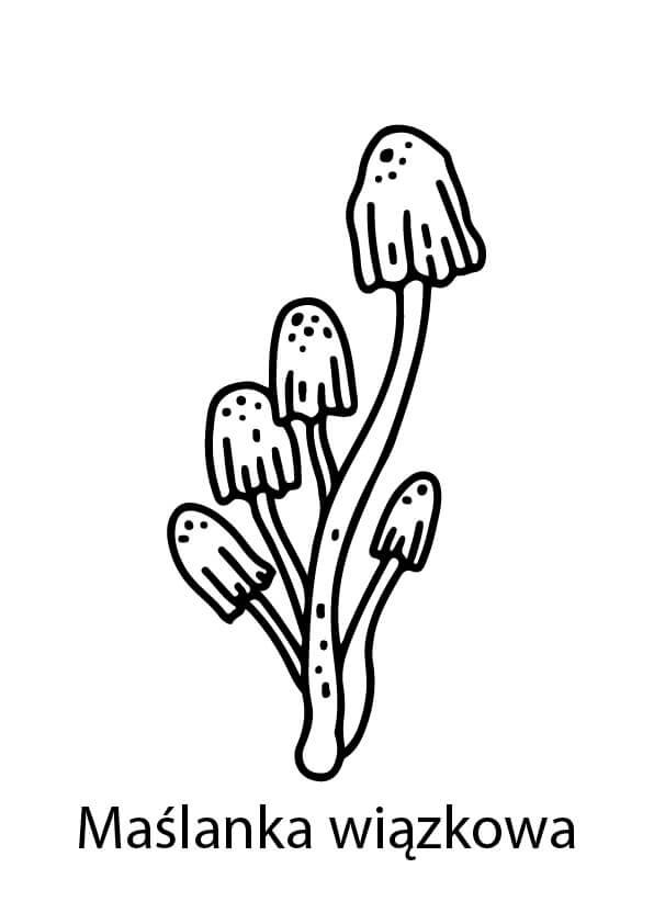 trujące grzyby rysunki